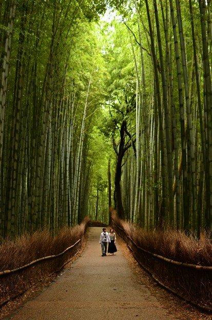 Pesona Alam Di Balik Hutan Bambu Jepang Yang Sangat Mengagumkan